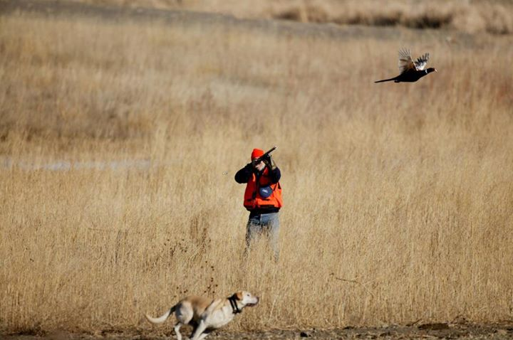 Dog Chasing Rooster hunter shoots